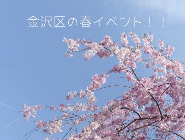 金沢区の春イベント!!